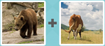 Pictoword level 187 - Bear Cow