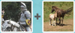 Pictoword level 52 - Knight Sir Joust Horse Foal Mare